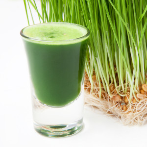 extra large wheatgrass